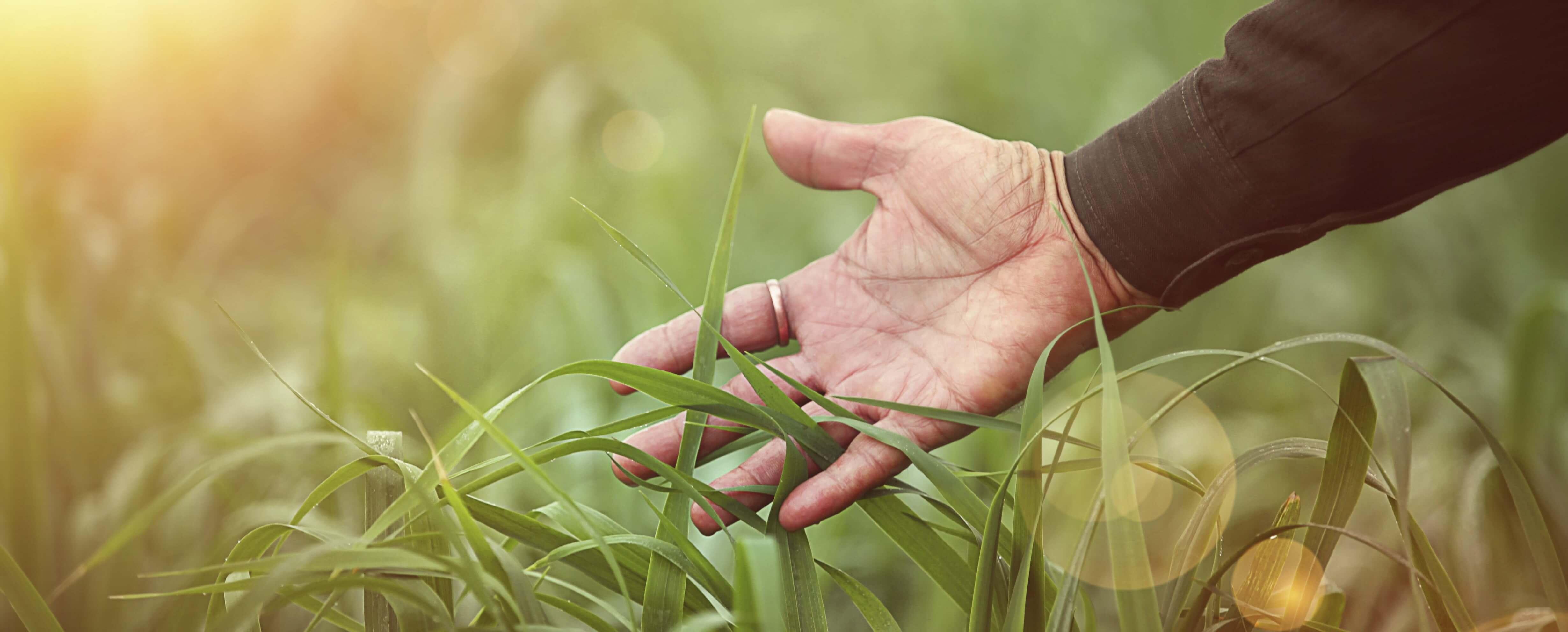 Identification d'agents pathogènes agricoles