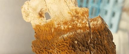 La mérule pleureuse (cancer du bâtiment)